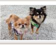 ペットと人のための防災用品メーカー