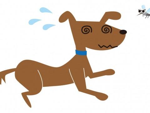 フィラリアにかかった犬