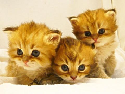 猫健康管理士通信講座では、ホームケアで病気を予防し、愛猫を美しく健康に