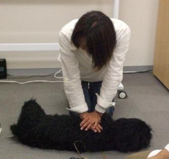 心肺蘇生モデル犬で心臓マッサージ体験します。