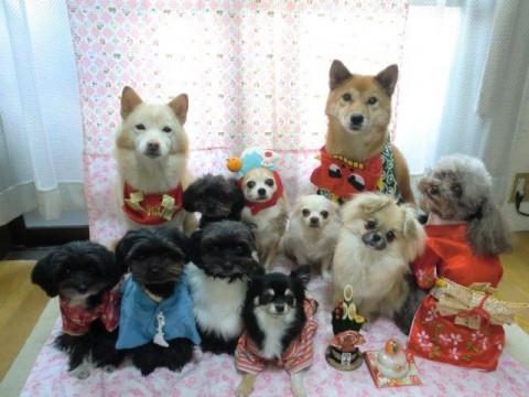 セミナーモデル犬の咲きちゃんファミリー大集合♪