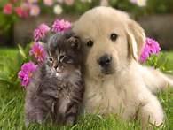 よりそう猫と犬