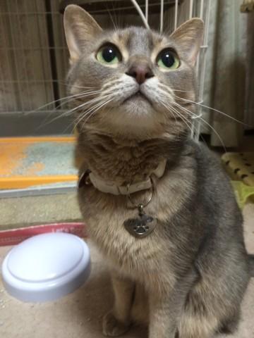 愛猫「ミナコ」