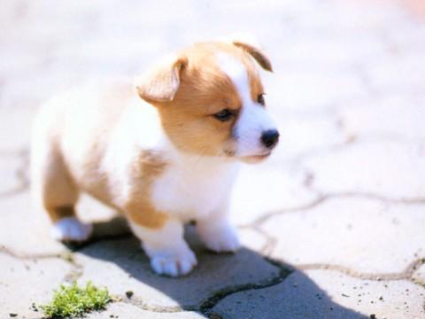 dog37_1024768