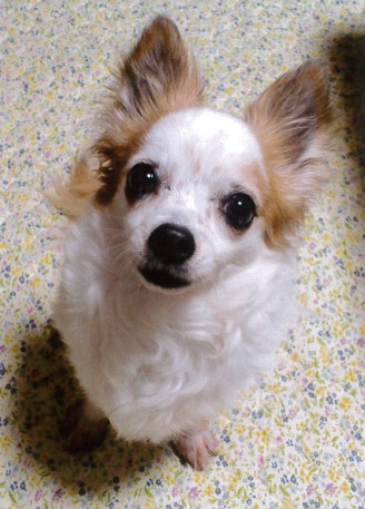 可愛い愛犬のお写真ありがとうございます♪