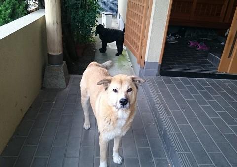 KONくん(4歳)MIX犬