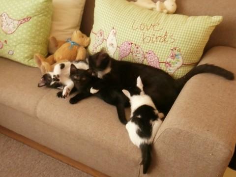 大切にされて猫ちゃん達幸せですね!