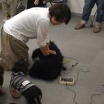 動物の救急救命実技セミナー